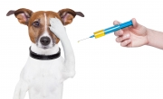 Szczepienie psów